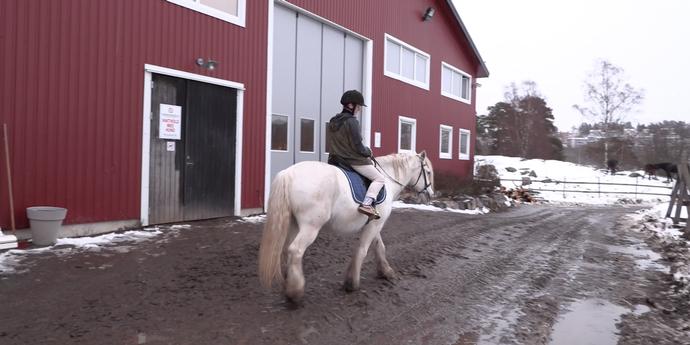 Ut og stjæle hester