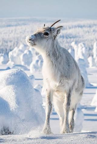 Ailos reise - Et nordnorsk eventyr